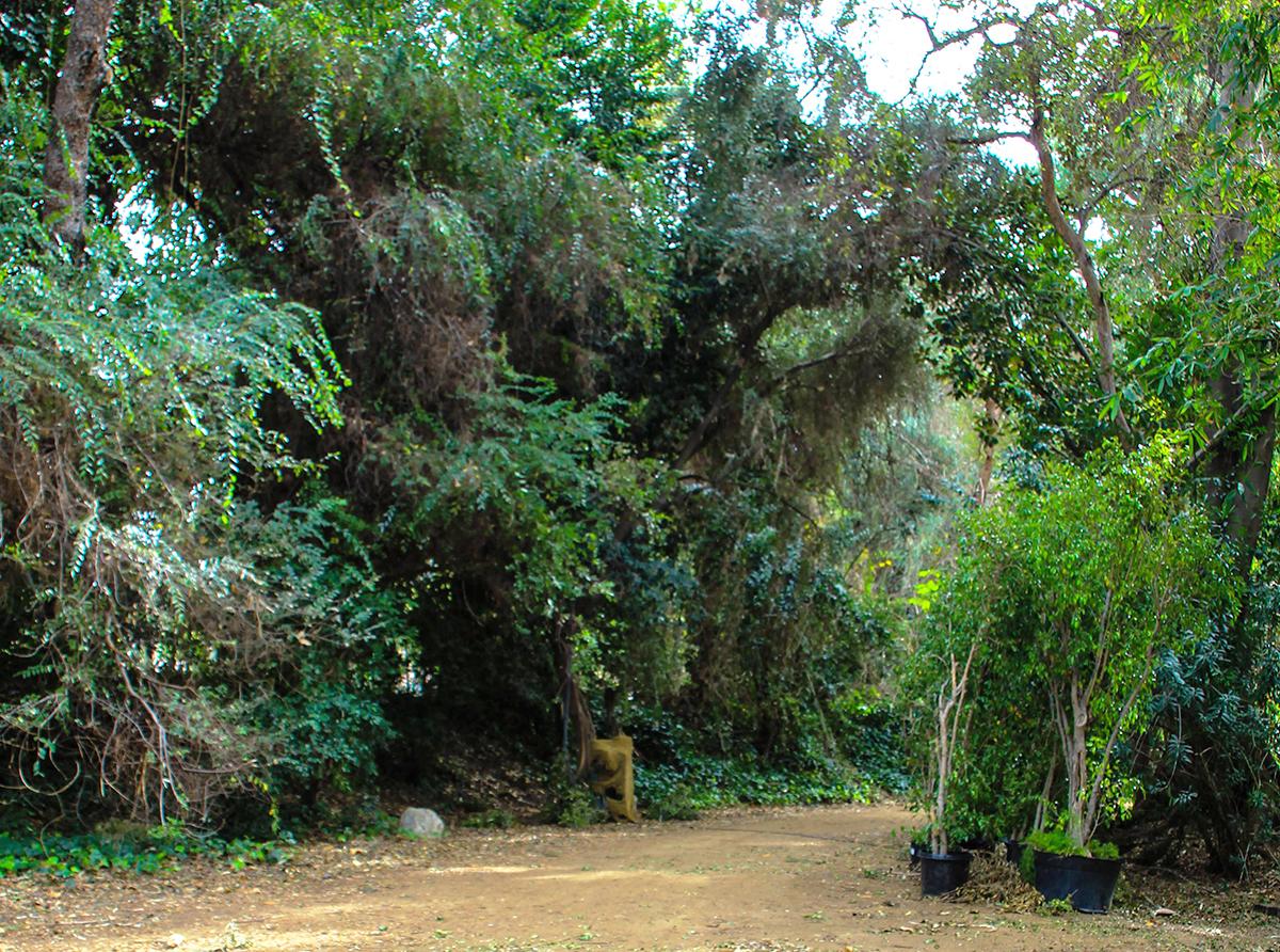 jurassicpark8